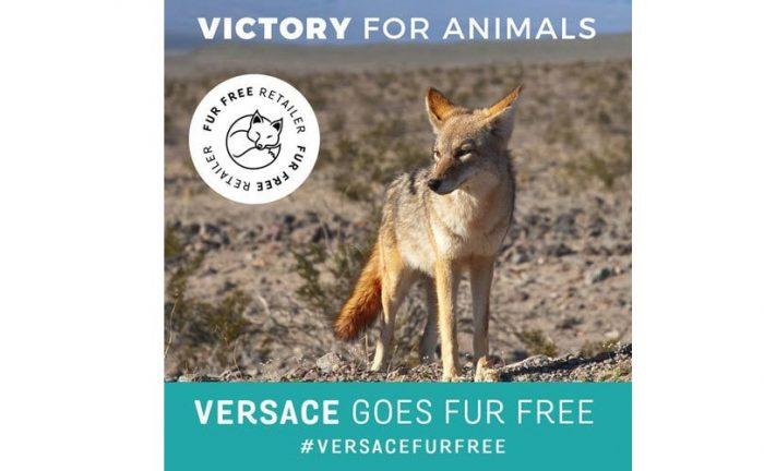 victory-versace-fur-free