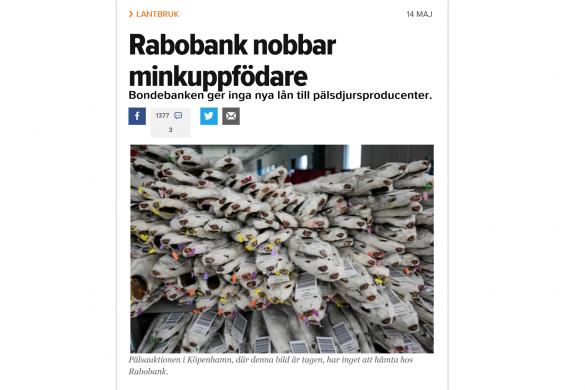 """Шведска статия със заглавие: """"Рабобанк не финансира ферми за норки"""""""