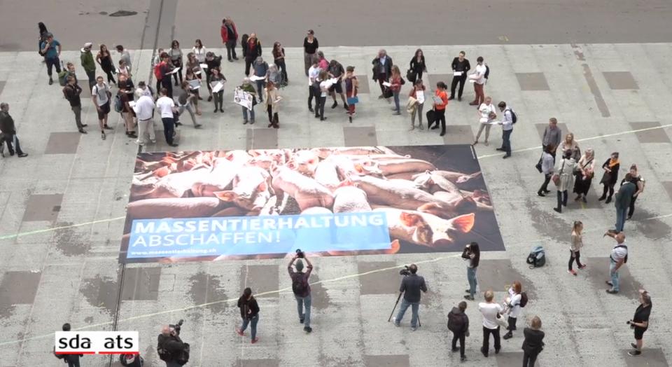 Забрана за интензивното животновъдство в Швейцария: Национална инициатива