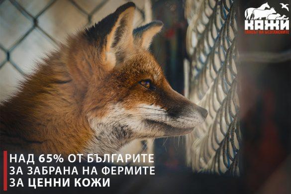Над 65% от българите за забрана на фермите за ценни кожи.