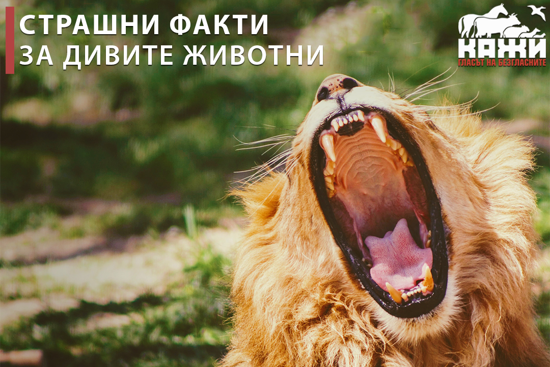 Страшни факти за дивите животни.
