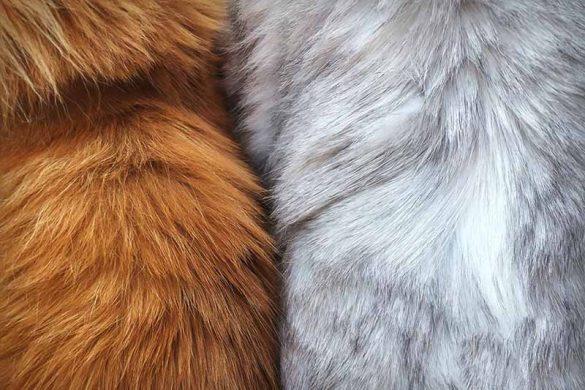 Ценни кожи (кожа с косъм/козина)