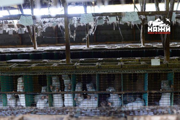 В Гърция 80% от гражданите са против фермите за кожи.