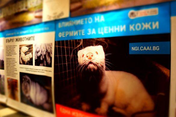 """Изложба """"Влиянието на фермите за ценни кожи"""""""