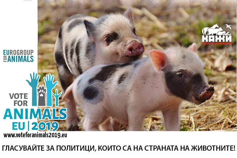 Гласувайте за политици, които са на страната на животните! www.voteforanimals2019.eu