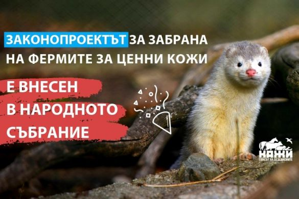 Статия_корица, внасяне на законопроекта (КАЖИ)