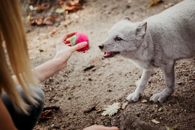 забрана жестокост ферми за кожи лисици