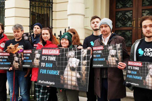 демонсрация пред българското посолство в Лондон