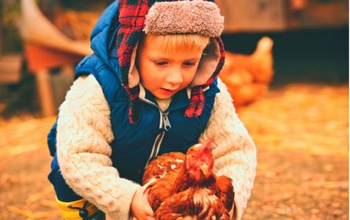 Дете с кокошка