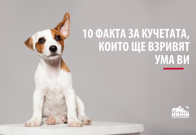 10 факта за кучетата, които ще взривят ума ви
