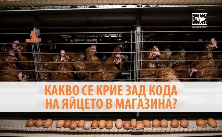 Какво се крие зад кода на яйцето в магазина?