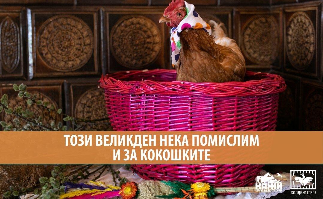 Този Великден нека помислим и за кокошките